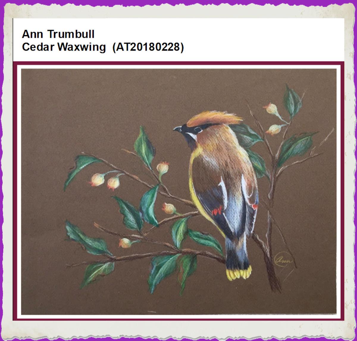 ann-trumbull-cedar-waxwing-frame-2.jpg