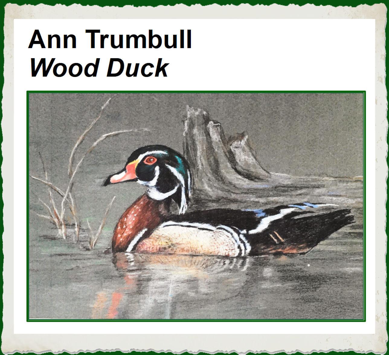 ann-trumbull-wood-duck-frame.jpg