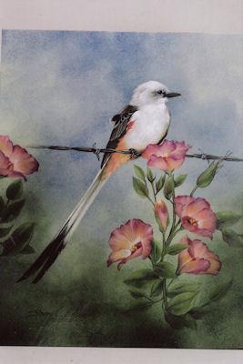 sn-scissor-tailed-flycatcher-1914007.jpg